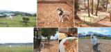 大分県の犬カフェ・ドッグカフェ全90件中おすすめ9選!ドッグラン併設、ドッグメニューありなどワンコ連れに人気のレストランやカフェ。