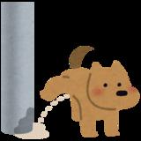 室内飼いのオス犬の片足上げおしっこをやめさせるにはどうしたらいい?しつけの方法は?