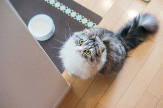 その食べ物、猫が食べてギリギリセーフ?アウト?