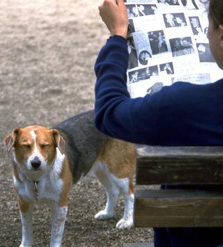 実は犬は順位付けをしているわじゃない?