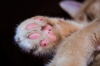 猫の手肉球には秘密がたくさん!?