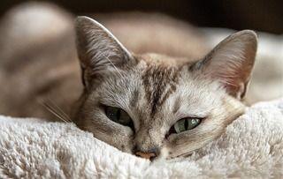 愛猫が下痢をしてしている!!【下痢の種類・原因・対処法・下痢に関する病気】