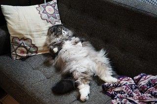 【猫あるある】不思議だけどよくする猫の行動まとめ