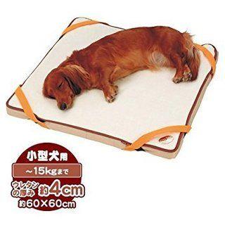 小型犬のにピッタリの介護グッズ3種