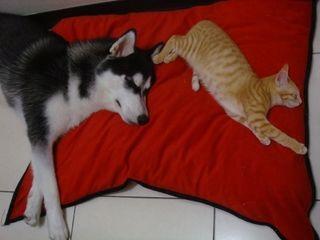 犬や猫のウィルスや細菌による感染症とその症状