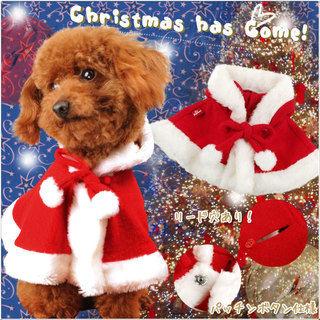 【コスプレ】ペットもクリスマス気分を味わいましょう♪【可愛い】