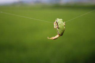 「 #二度と撮れない写真を貼れ 」のタグで動物たちの奇跡の写真が幻想すぎる