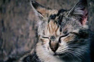 【原因別】消臭方法を紹介!ペットの臭いの原因は一体どこから?