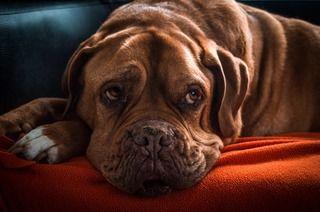 シニア犬の認知症、徹底解剖。認知症チェックリスト、そのサインと症状別対策方法まとめ