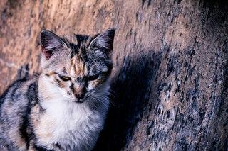 犬猫の分離不安症とは、どんな病気?