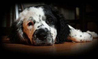 飼い犬がケガをした!意外と分からないワンちゃんの外傷対処法!