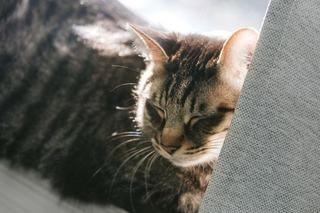 ペットロスからの克服、みんなの次の犬・次の猫を迎え入れるまでの期間は?