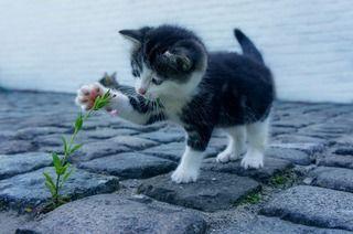 猫はなぜ飼い主に「おみやげ」を持ってくる?その意外な理由とは!