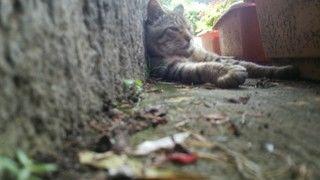 これから猫をお出迎えする為の前準備【環境編】