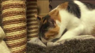 毛布をモミモミしている猫が可愛すぎる【動画】