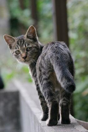 しっぽの動きで猫の気持ちがよみとれる!