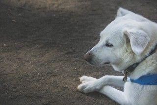 病気?もしかしてそれは老犬のサインかも!老犬になって変化するもの・かかりやすい病気
