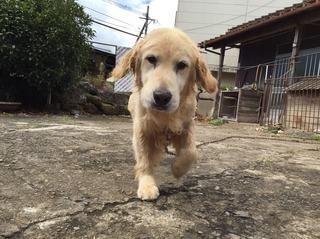 老犬が水を飲まなくなった場合の水分補給方法と病気のサイン