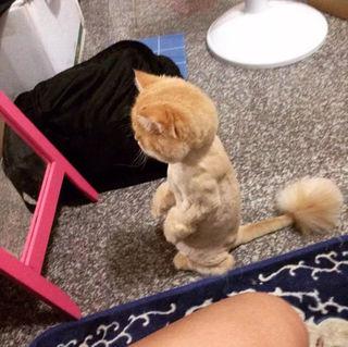 一度はやってみたい猫のかわいいカット画像まとめ
