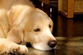 シニア期の散歩と運動量。老犬になって気を付けることは?