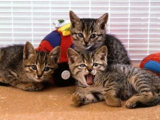 どんな活動をしているの?愛護動物団体ボランティアの活動内容