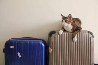 愛犬・愛猫との旅行を楽しむために。  乗りものを利用する際に気をつけること【飛行機編】