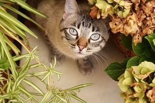 〇〇種類もあるの!?意外と多い猫にとって危険な植物!