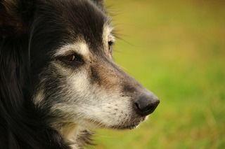 愛犬がご飯を食べなくなった時に考えられる原因は病気だけではなかった?!