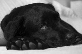 犬の脱水症状…。夏に多い症状の対策と予防まとめ