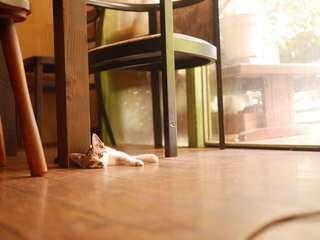 【追記:里親決まりました】【大分/子猫の里親募集/迷い猫】「ぼく」か「わたし」かわからないけれど、ここにいます