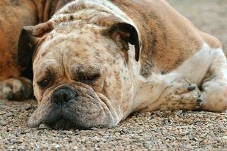 家具の隙間に入りたがる老犬の対処法