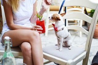 愛犬に1番に教えたい「オスワリ」【教え方・コツ・活用法】