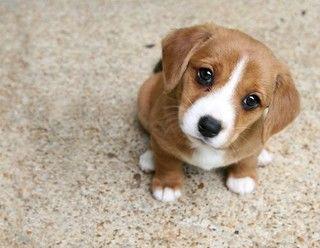 犬猫のマイクロチップの種類や値段、5つのメリットと3つの懸念