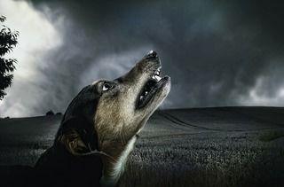 最近愛犬の夜鳴きが増えた・・そんな時に考えられる無駄吠えの原因・4つの対処法