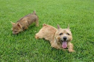 最近愛犬の口臭がすごい・・・それは病気のサイン?口臭で分かる病気・治療法・口腔ケアの方法