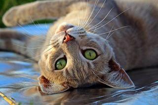 猫アレルギーだけど猫飼ってる人はどんな対策してるの?12の予防法まとめ。