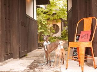 臼杵市城下町、二王座にある古民家カフェ「Cafe Delicatte(カフェデリカッテ)」。テラス席は動物同伴OK!