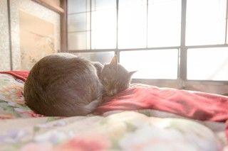 自分の愛猫にぴったりなベットやハウスをさがしてみては??