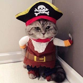 犬・猫だってハロウィン仮装13選!やらされてる感もかわいいすぎる、おもしろかわいいペット仮装。