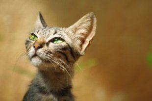 猫の病気やアレルギーの原因になる危険な食べ物