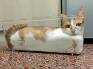 イグ・ノーベル賞「猫は固体であると同時に液体でもあり得る!?」流体力学で証明 12選