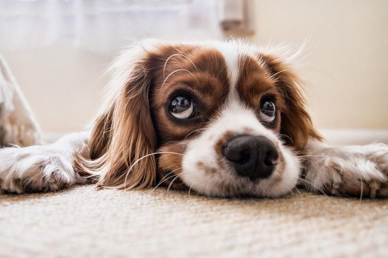 犬が目薬を嫌がる…ワンちゃんに嫌がられないための目薬の差し方がある?