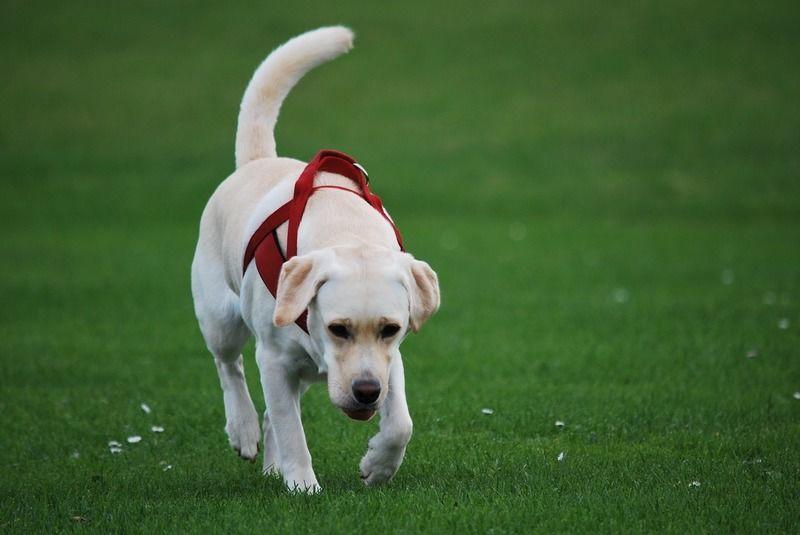 愛犬のストレスは大丈夫?ストレスチェックとストレス発散方法