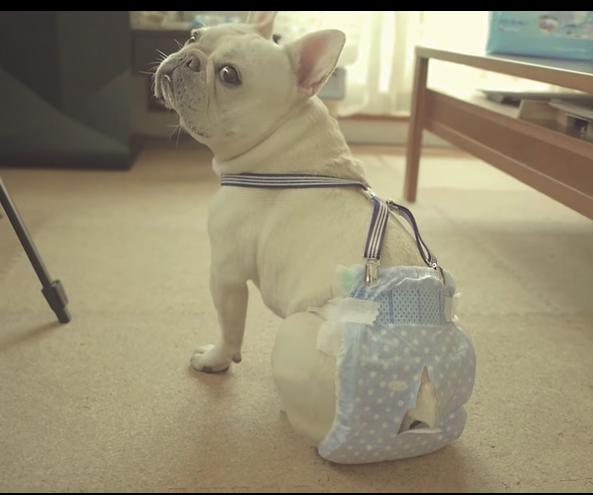 犬のオムツのサイズの選び方・付け方を徹底解説!