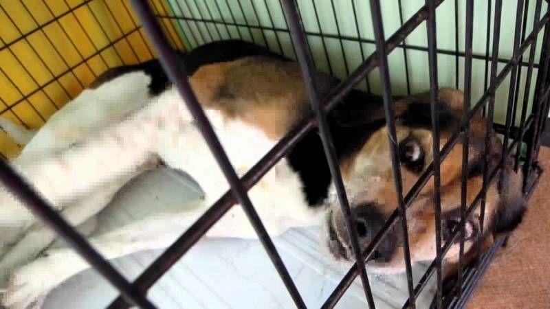 犬や猫にもてんかんがあるの!?症状・原因から治療まで犬猫てんかんの病気を知る|病気事典