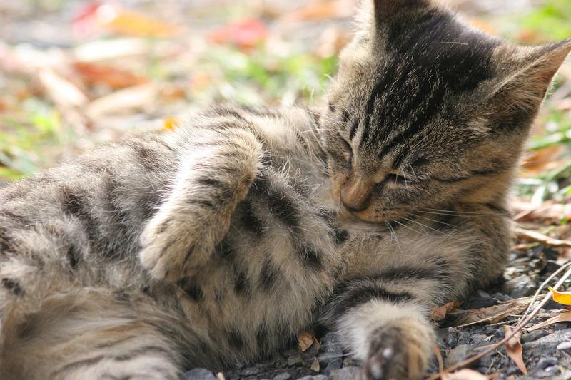 なる前に知っておきたい猫かかりやすい病気ベスト5
