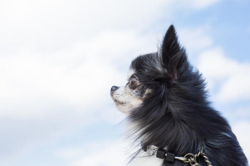 「ペットの犬や猫が死んだら」死んだ直後からペットの火葬・埋葬方法や供養までの流れ