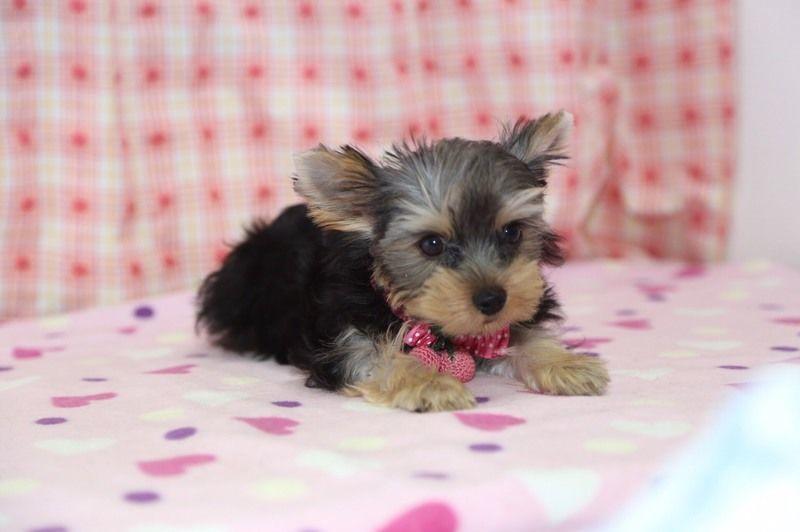 人気小型犬の性格まとめ!あなたが好きな犬の種類はどんな性格??