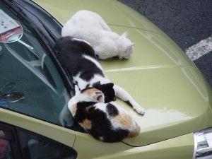 冬場は車のボンネットをコンコンするだけで小さな命が救われる!?