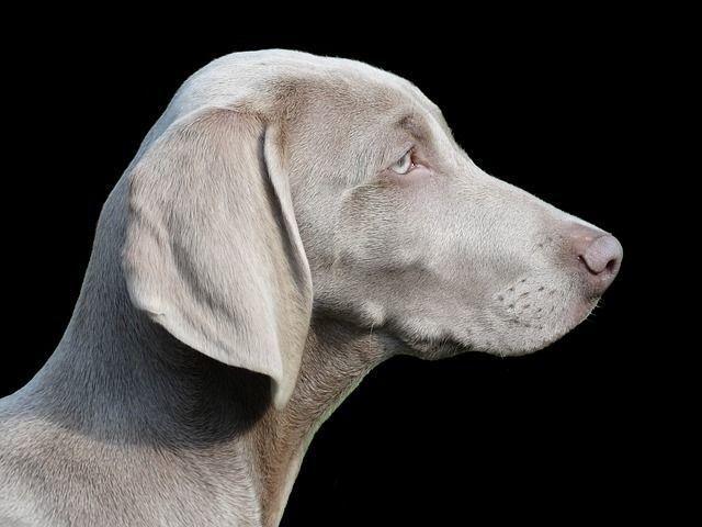 【閲覧注意】犬の体に大量発生したダニたち【対処法・予防法】